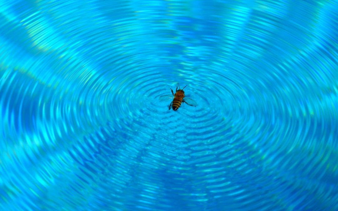 """Is Your Life """"Buzzing"""" or """"Flowing""""?"""