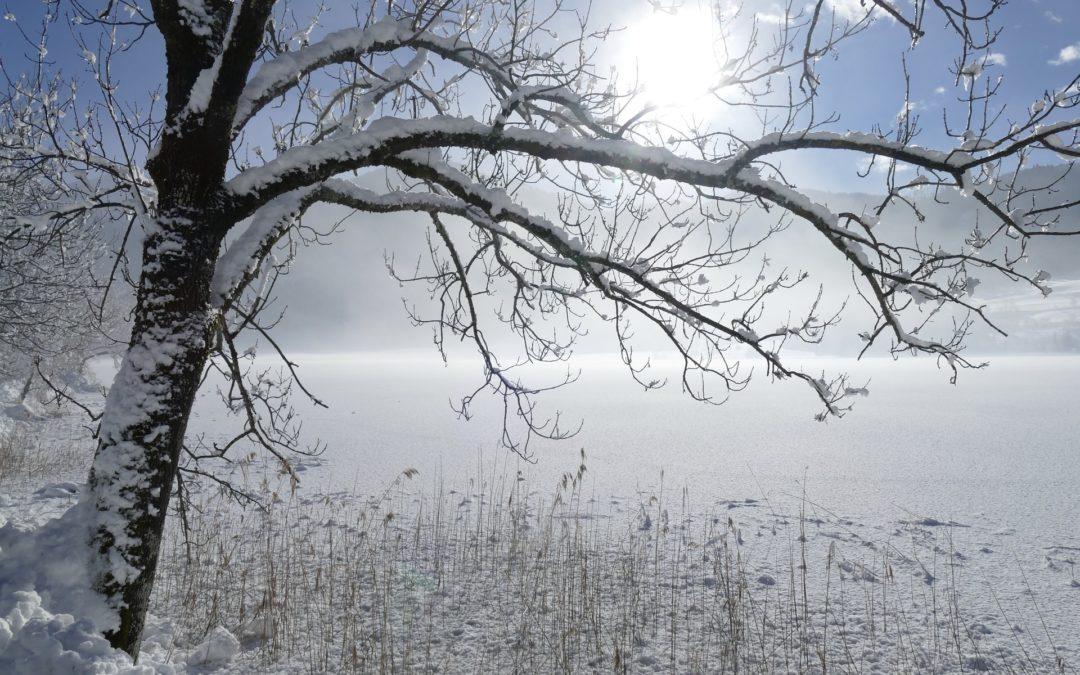 A winter Respite…a winter Thaw…